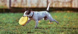 Dog-playing-on-ground